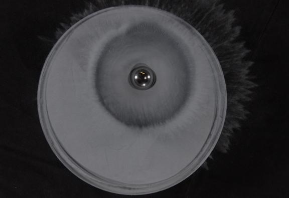 Equispheres bearing